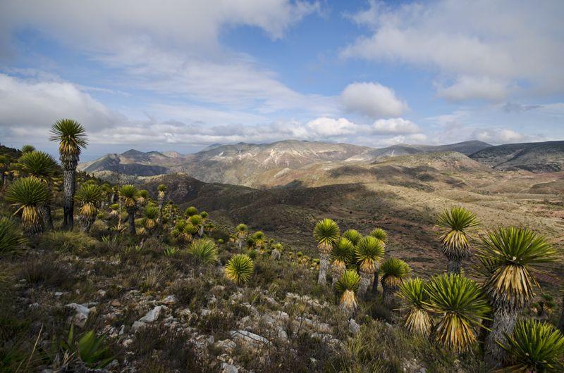 Sierra de Zapalinamé, Saltillo, Coahuila, México Reserva