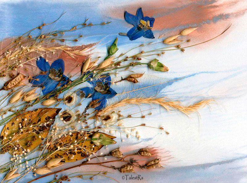 картины из гербария: 24 тыс изображений найдено в Яндекс ...