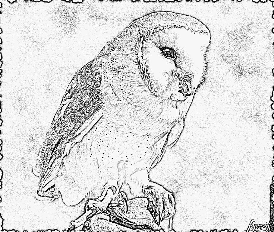 Imprimer coloriage chouette effraie animals coloriage chouette chouette en chouette effraie - Chouette a dessiner ...