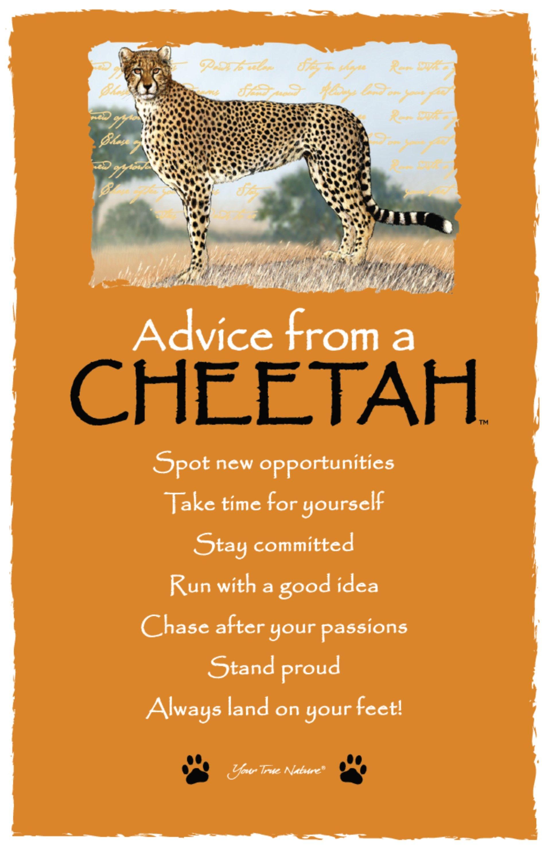 Cheetah dating site