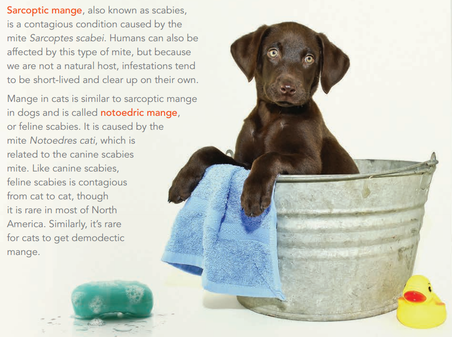 The dirt on mange in dogs and cats
