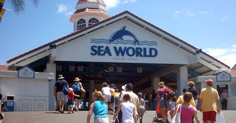 Seaworld In Australia Yes Its True And You Can Go And See The Wildlife They Have There Fun For All Ages 3 Sea World Gold Coast Queensland Australia