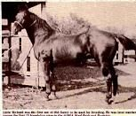 LITTLE RICHARD  H, QUARTER HORSE, 1922 	Color: ch  AQHA# 0000017  Breeder: King Ranch, Kingsville,TX Owner: Harl R. Thomas, Raymondville,TX Sire Of Peppy PRO.DGHTS: Emily, Ida Red, La Lottie, O Meareas Miss Richard.