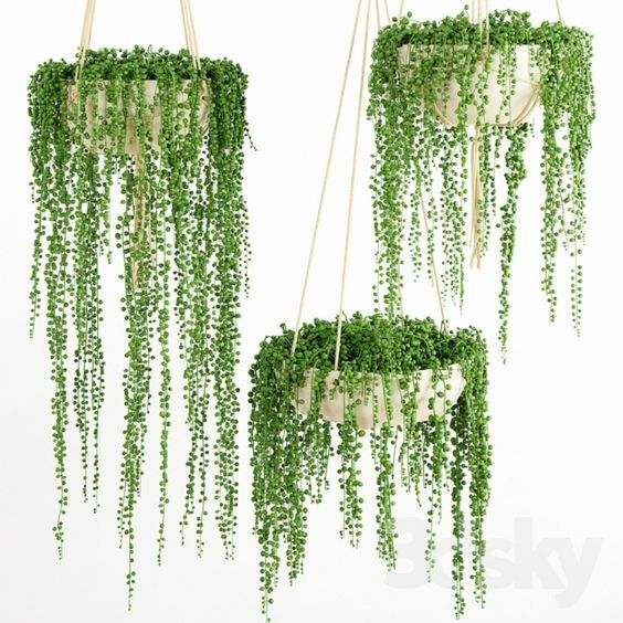 15+ Beautiful Hanging Plants Ideas #plantsindoor