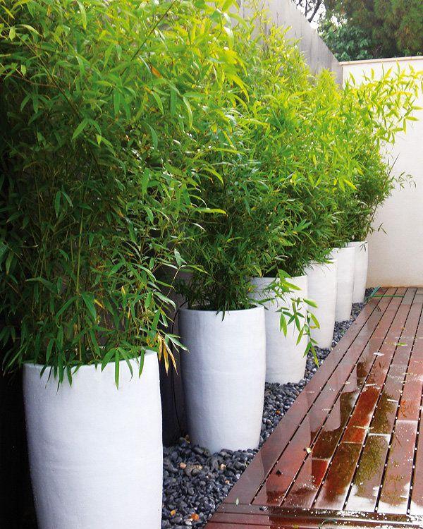 F g paisajismo jardin jardinagem paisagismo jardim y jardim lateral - Jardineras con bambu ...