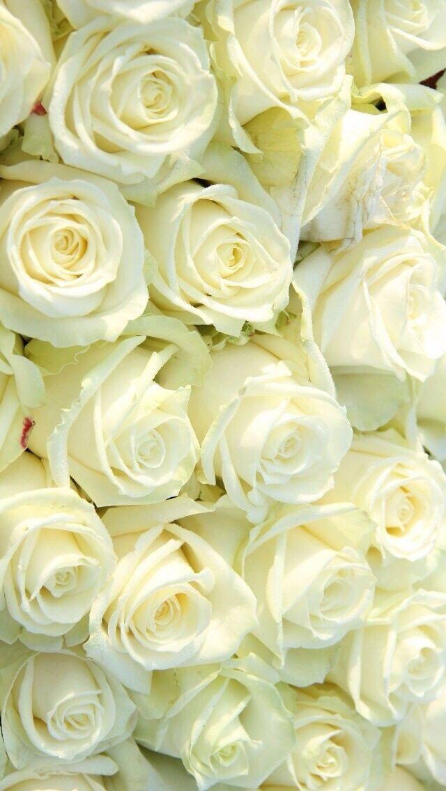 Wallpaper Iphone Rosas Blancas Pinterest Rosas Blancas