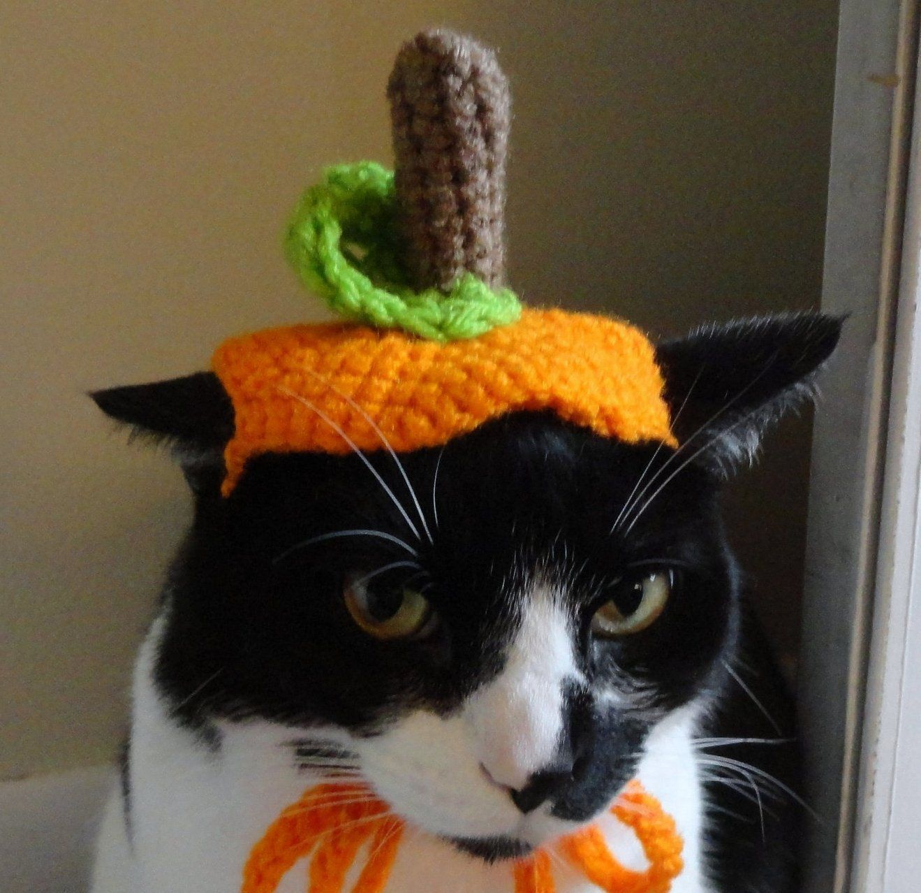 5f5aab0e0f9 Costume Ideas For Cats & Halloween Cat Costume Witch Kitty