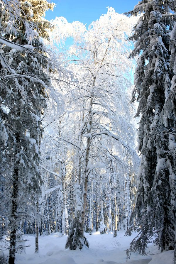 Forest world II by KariLiimatainen.deviantart.com on @DeviantArt