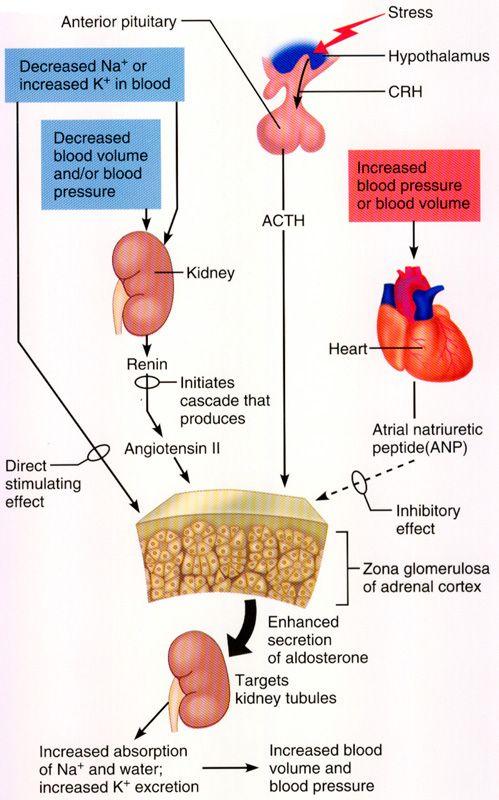 The Adrenal Fatigue (AF) Diet