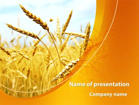 Httppptstarpowerpointtemplategolden ear of the wheat golden ear of the wheat presentation template toneelgroepblik Gallery