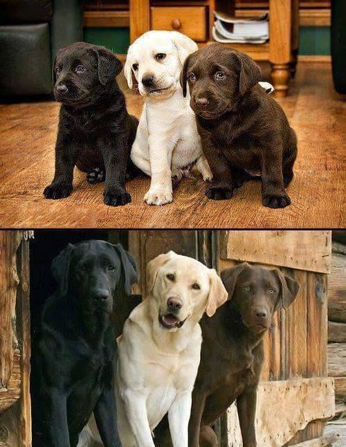 Siempre Juntos Animales Mascotas Perros