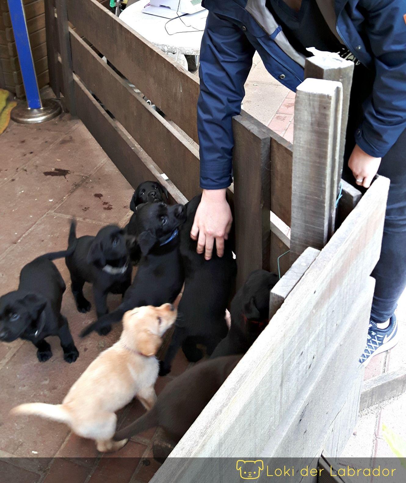Das Total Andere Welpenbuch Endlich Da Welpen Stubenrein Hunde Welpen Erziehung