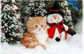 Resultat D Images Pour Chat Fond Ecran Ordinateur Katten Honden