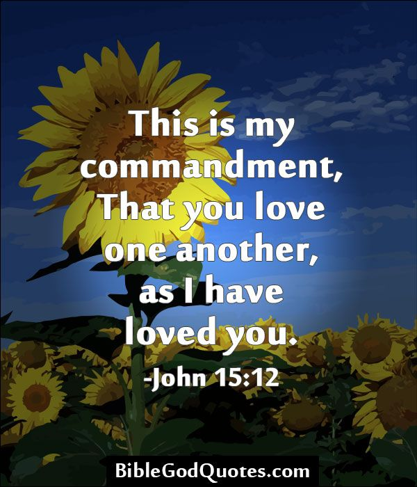 Love One Another Quotes: This Is My Commandment, That You Love One Another, As I