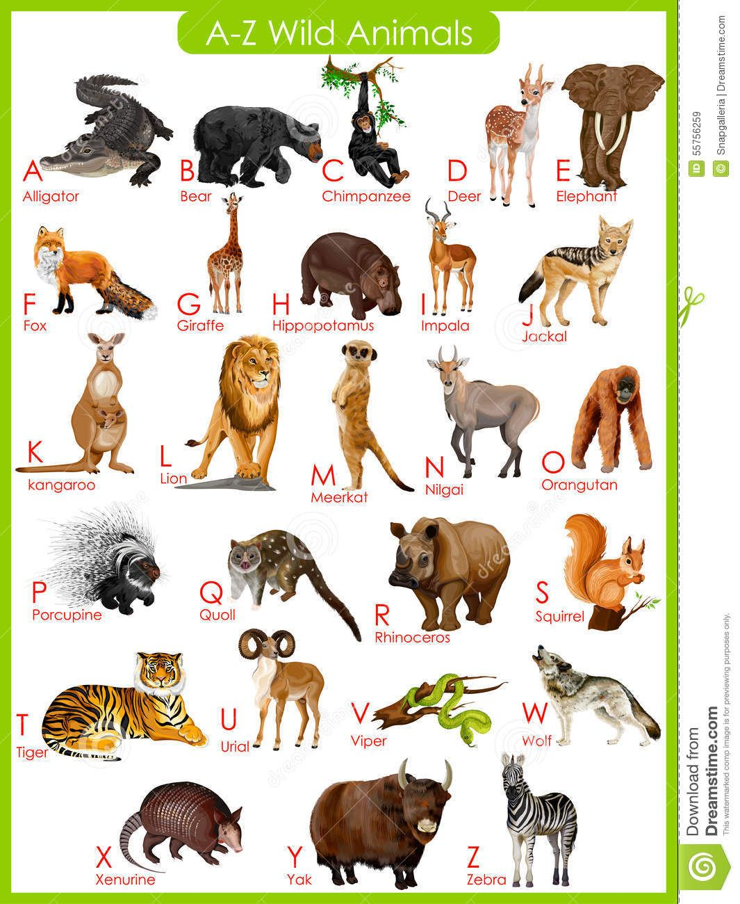 Chart Of A To Z Wild Animals Stock Vector Image 55756259 Wild Animals Pictures Animal Pictures For Kids Animals Wild
