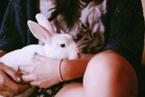Imagem de cute, rabbit, and white