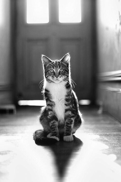 Waiting #Chat