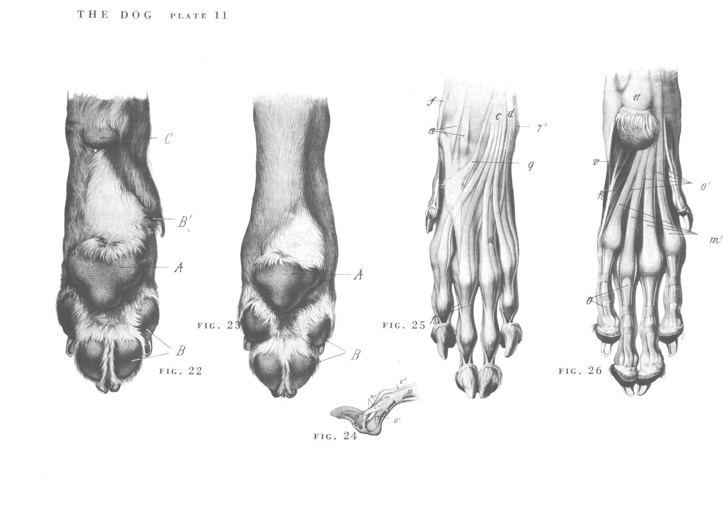 Pin by Paulina Duda on anatomy | Pinterest | Anatomy
