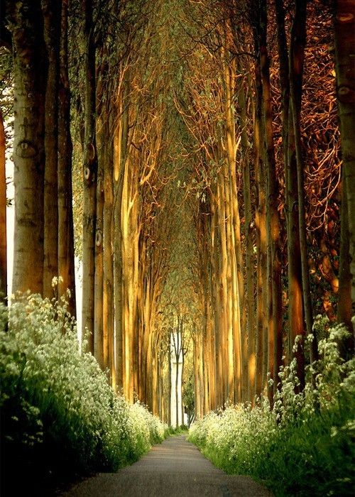 A path through columns of trees lined with flowers. Is this real?