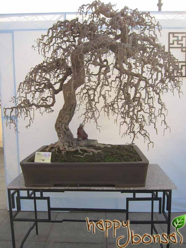 Image from http://www.happybonsai.com/wp-content/uploads/2010/12/Penjing-Bonsai-Exhibition-102.jpg.