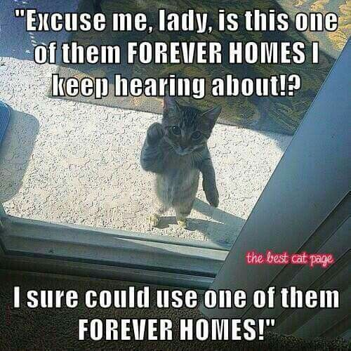 Give a kitty a FUREVER HOME!