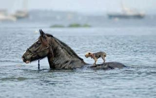A friend in need...