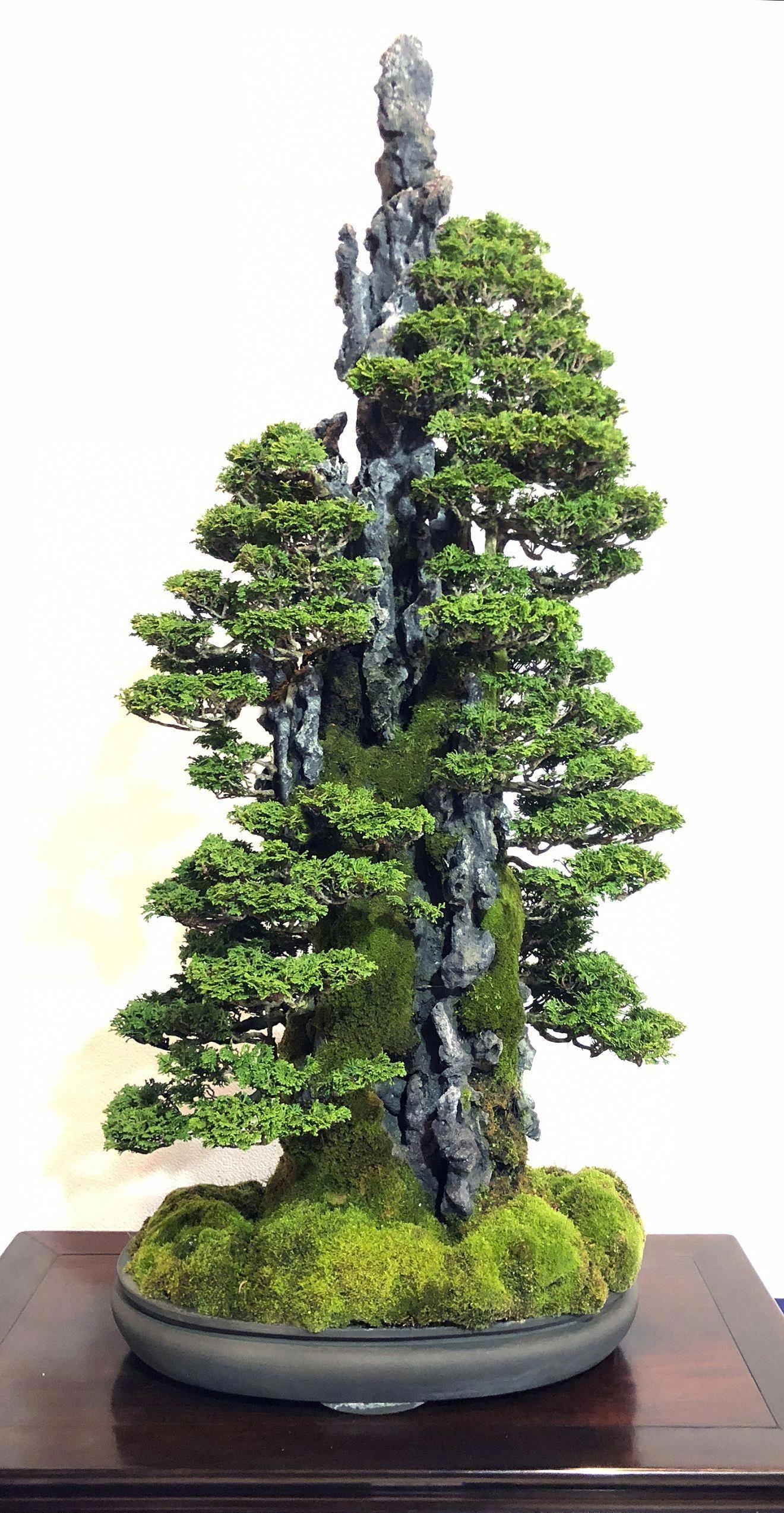 What Is An Outdoor Bonsai Bonsai Garden Indoor Bonsai Tree