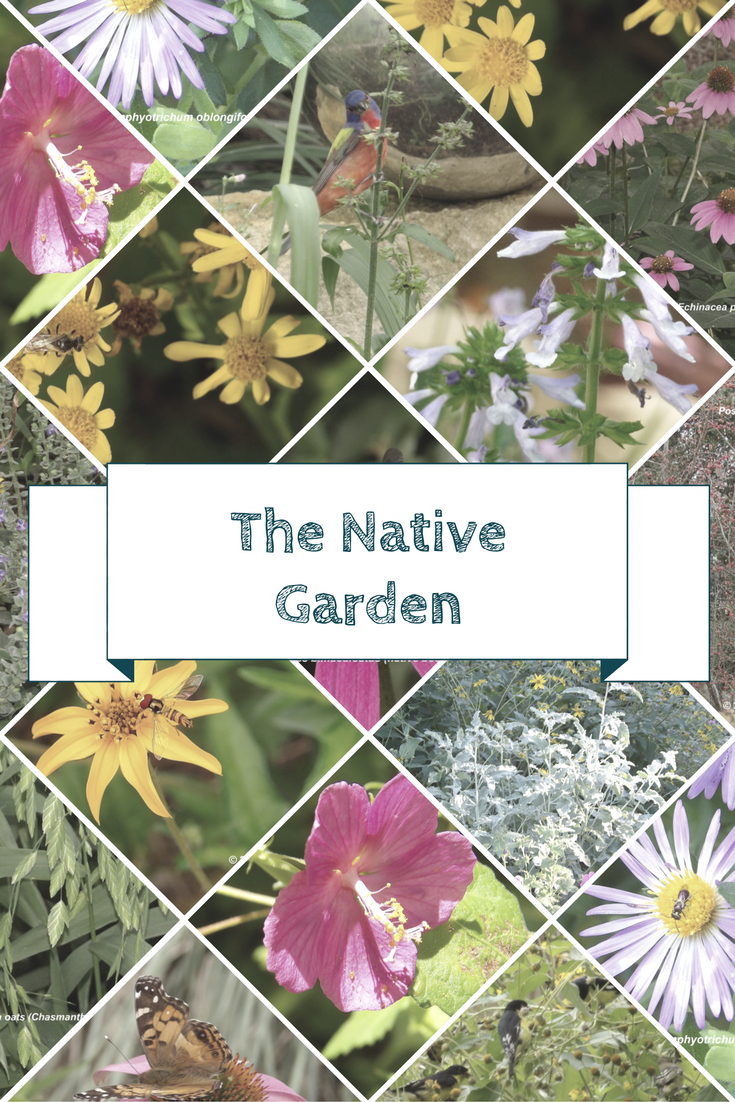 In Todayu0027s Guest Blog, Tina Huckabee Encourages All Gardeners To Plant With  Native Plants And