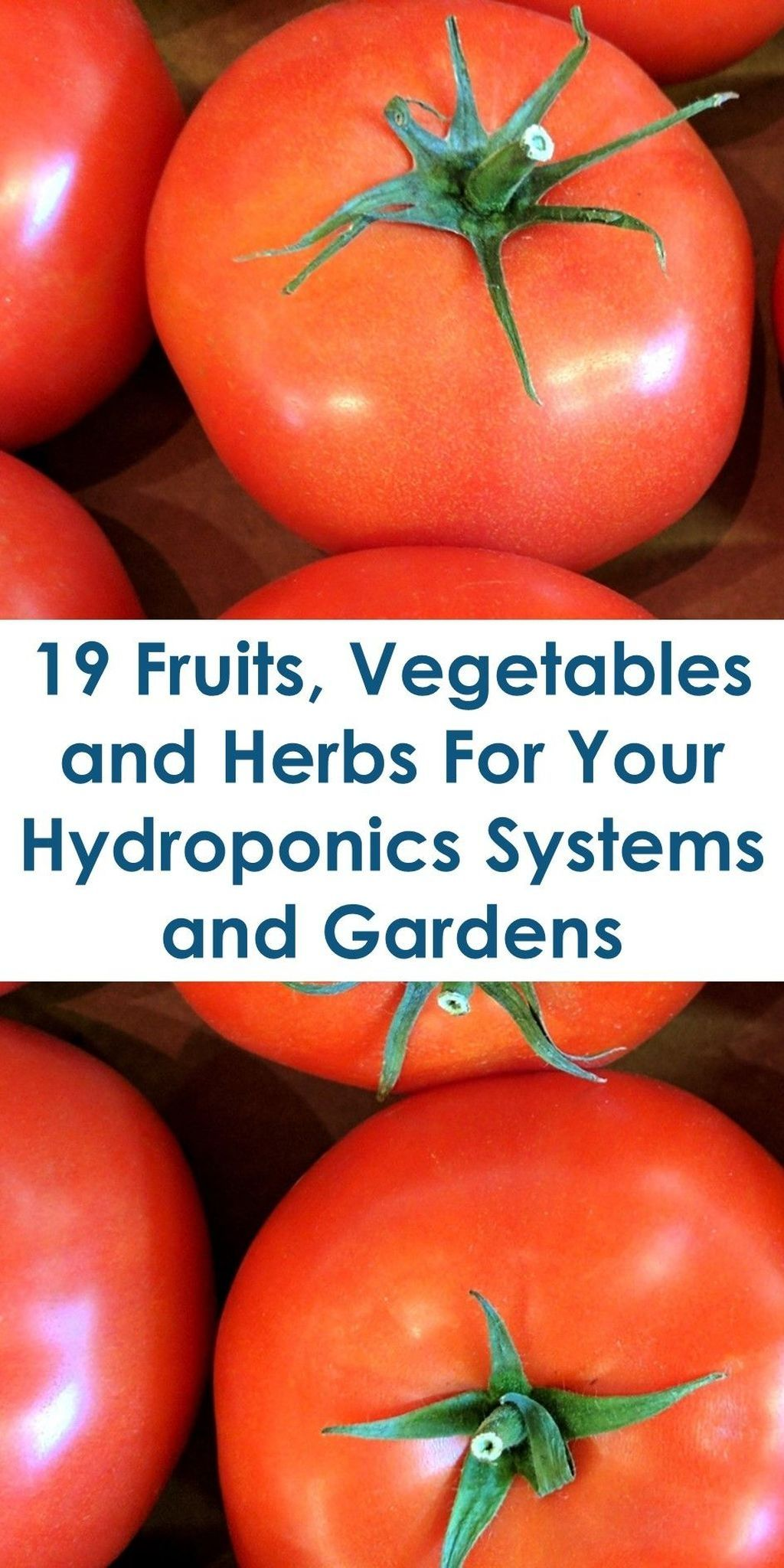 31 Awesome Hydroponic Garden Ideas For Stunning Home To Try is part of Hydroponics system, Hydroponic farming, Hydroponic growing, Hydroponics diy, Hydroponics, Hydroponic gardening - One of the best ways to grow the best vegetables as well as healthy full house plants is by hydroponic …