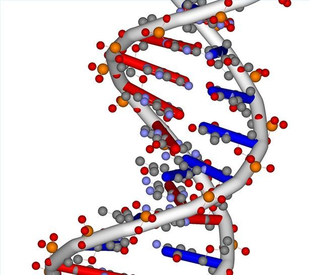 Nucleic Acid Facts | Dna, What's the and Nucleic acid