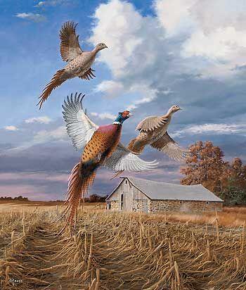Autumn Brilliance Pheasant by David A Maass