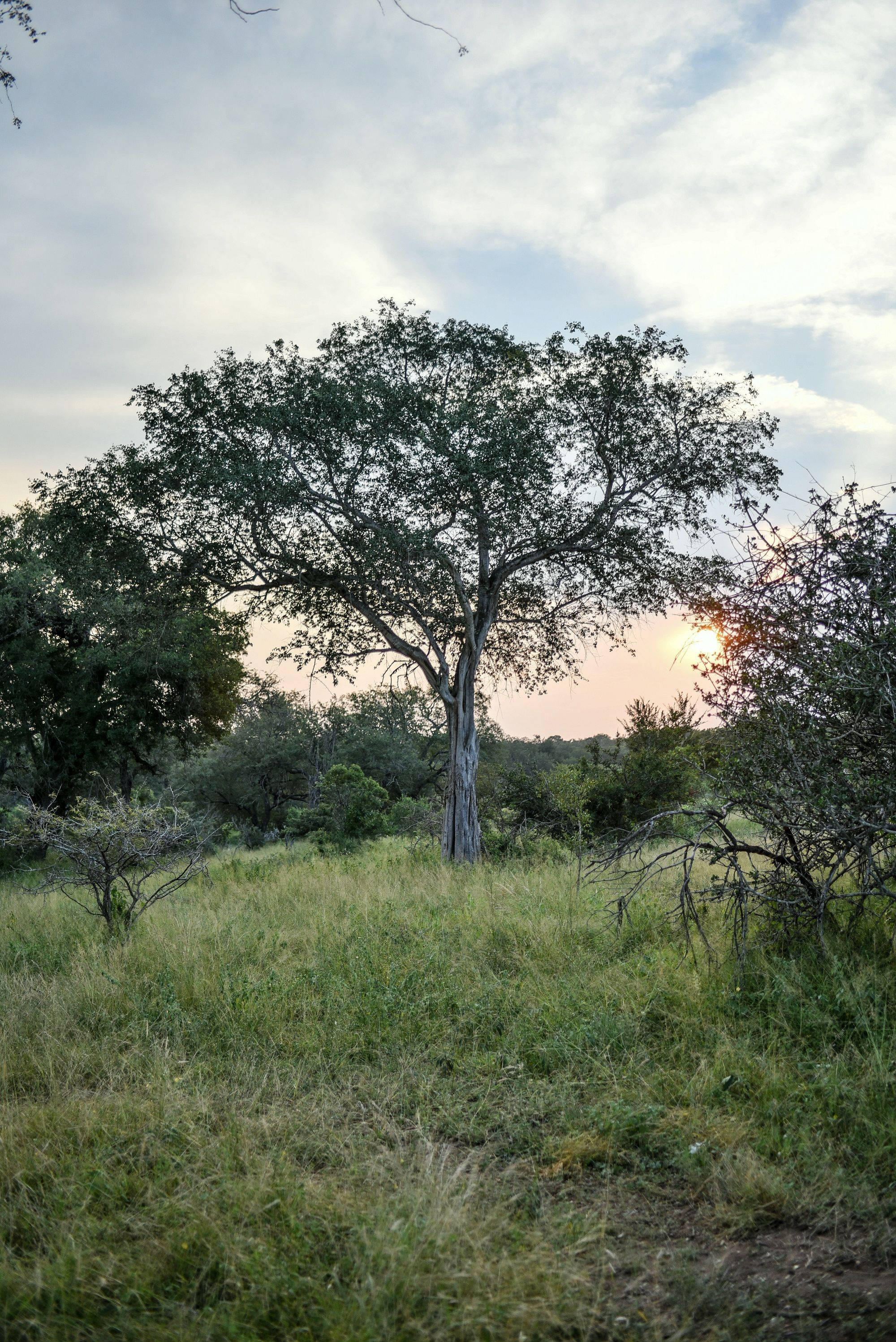 29+ Lion sands game reserve reviews collection