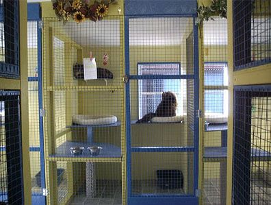 Cattery Accommodation Cattery Katzen