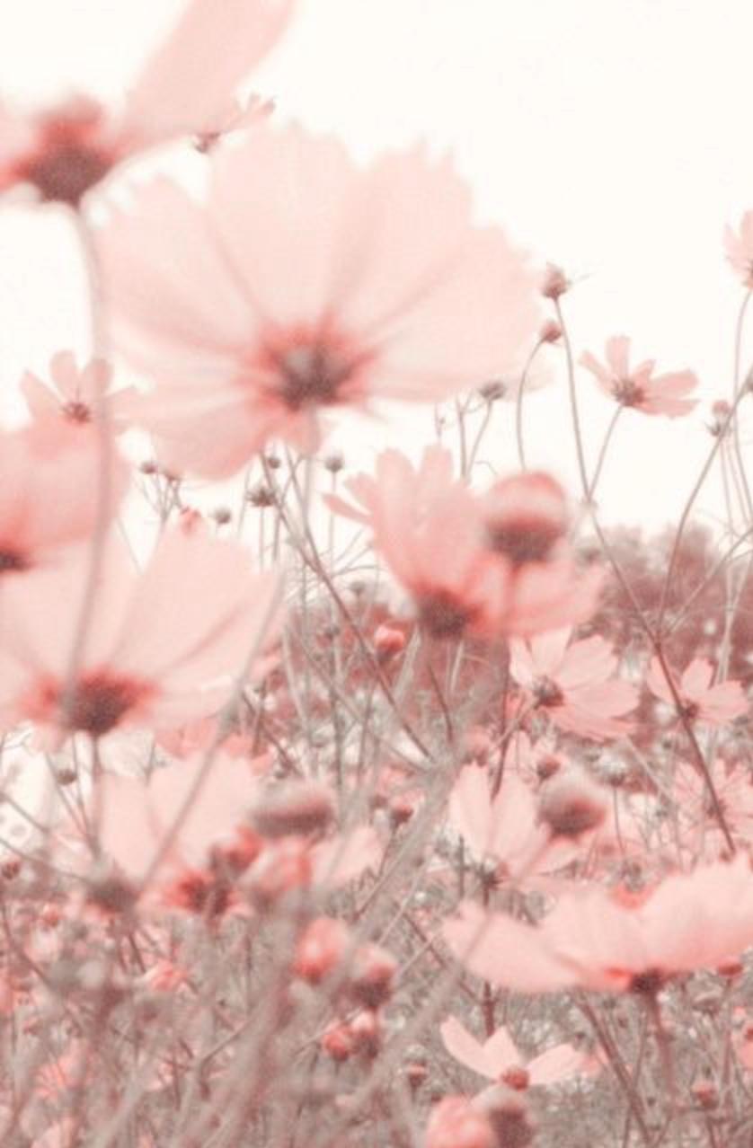 Summer flower meadow in pink chicchicfindingssy beautiful flowers izmirmasajfo