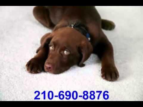San Antonio Carpet Cleaning Service 210.690.8876 - YouTube #homecleaning #home #cleaning #services