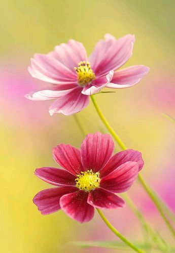 Very Nice Pink Flowers Flowers Flowers Photography Flowers