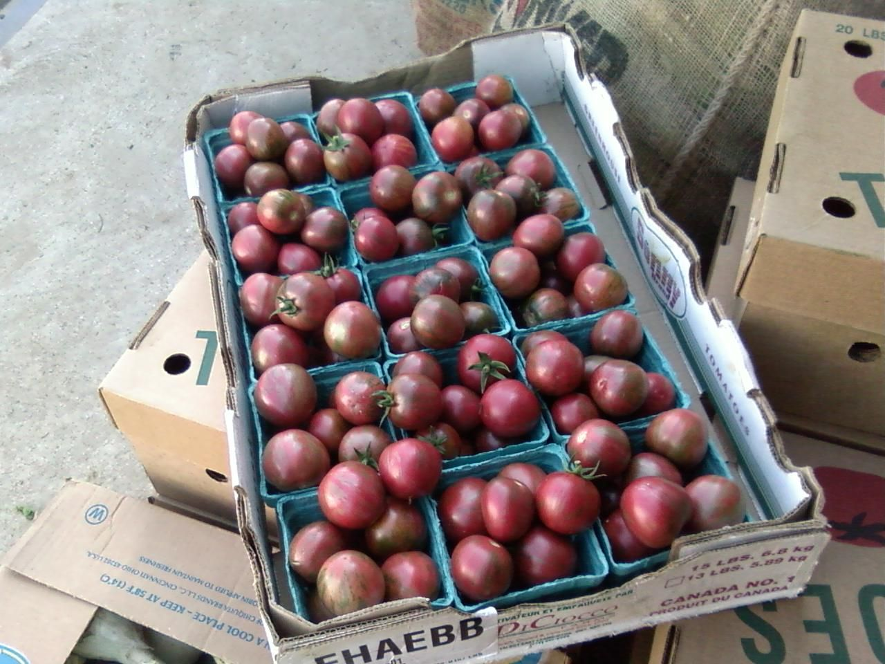 Heirloom Tomatoes from Foppema's Farm.  Northbridge, MA.