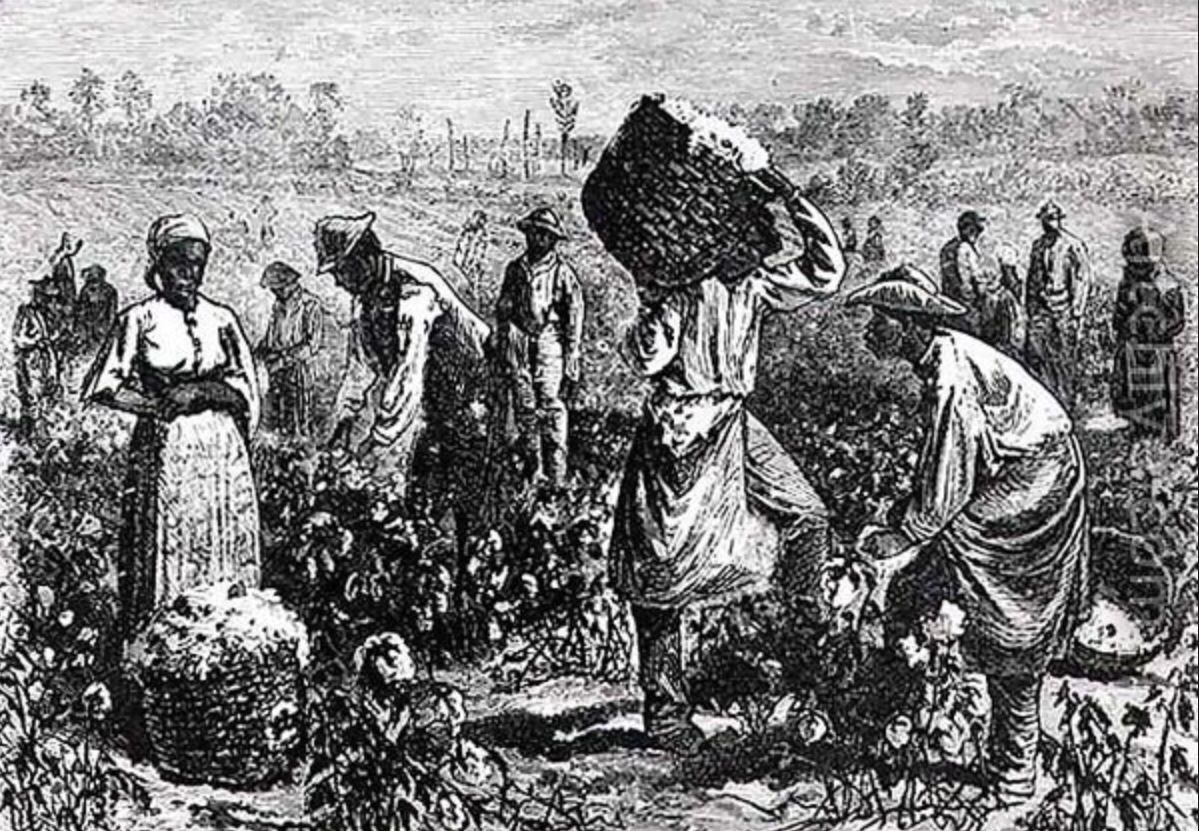 This a historical picture of slaves picking cotton which