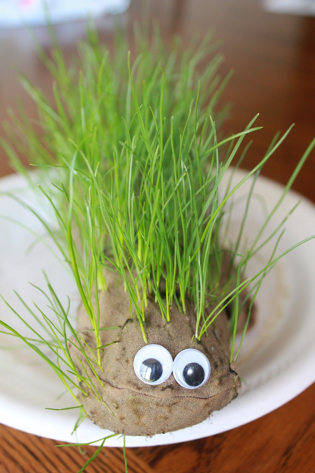 Diy chia pet use a knee high filled with soil and grass