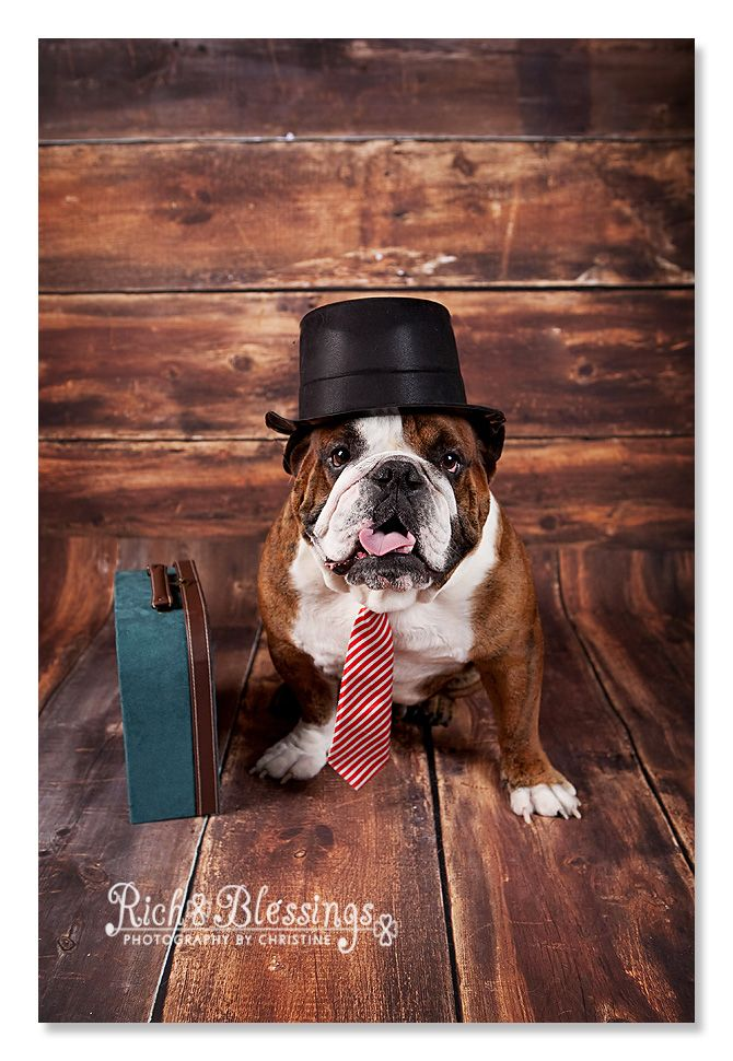 A Ruff Day At The Office English Bulldog Pet Portrait By Rich