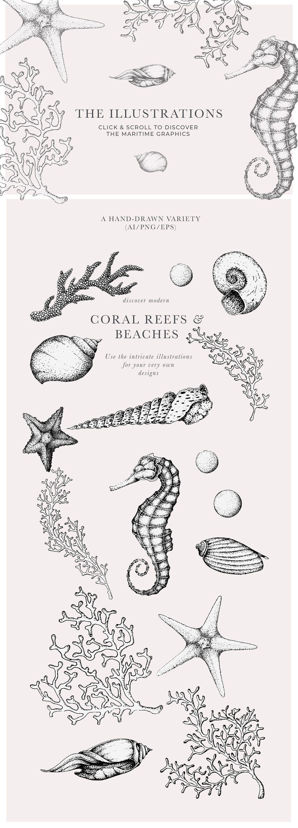 Coral Beach Maritime Illustrations 2020 ヴィンテージイラスト