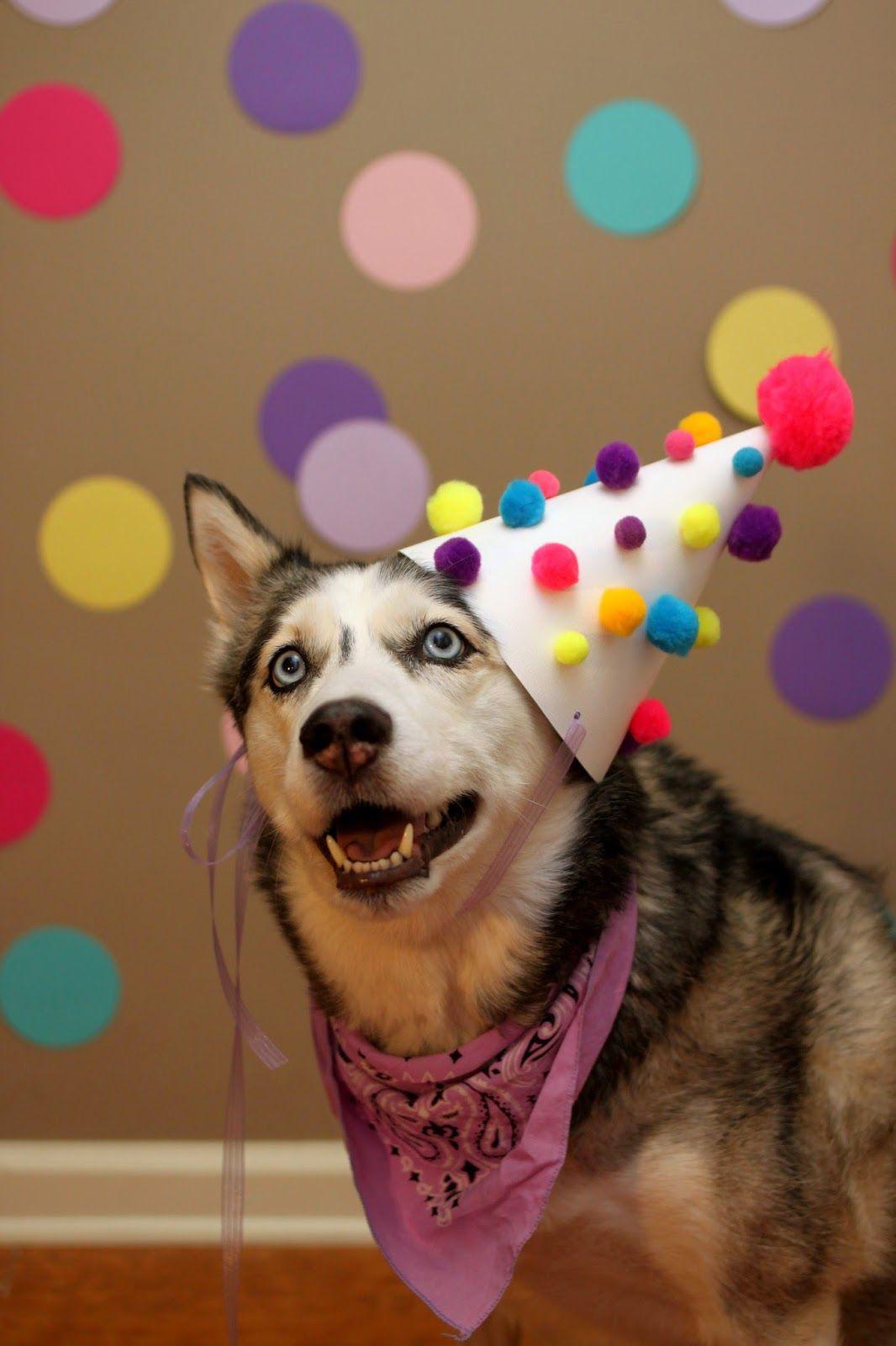 Открытки с днем рождения женщине с хаски
