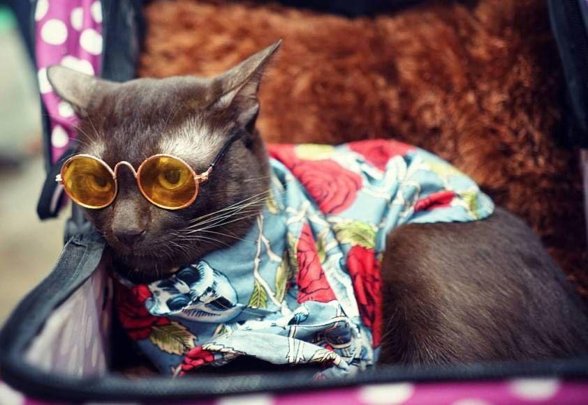90 Hipster Cat Names Hipster Cat Cat Names Cat Photography