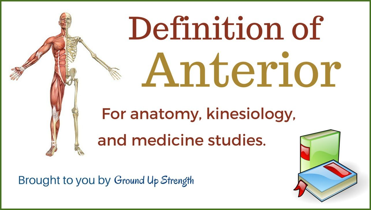 11 best Kinesiology images on Pinterest   Anatomy, Anatomy reference ...