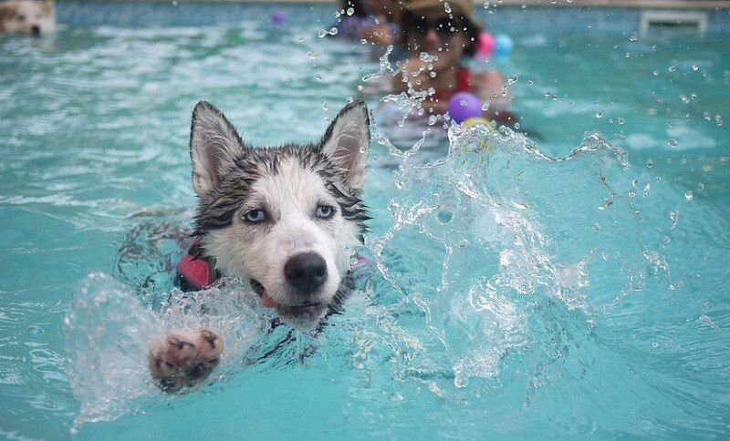 The Ultimate Dog Pool For Sale (Large and Small): 2018 Reviews and ...
