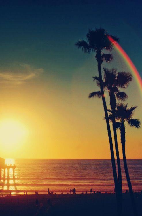 Palm Tree Sunset Rainbow At Ocean