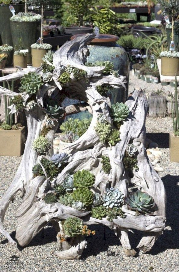 54 Ideas to Arrange your Succulent with Driftwood