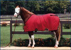 Should I Blanket My Horse?