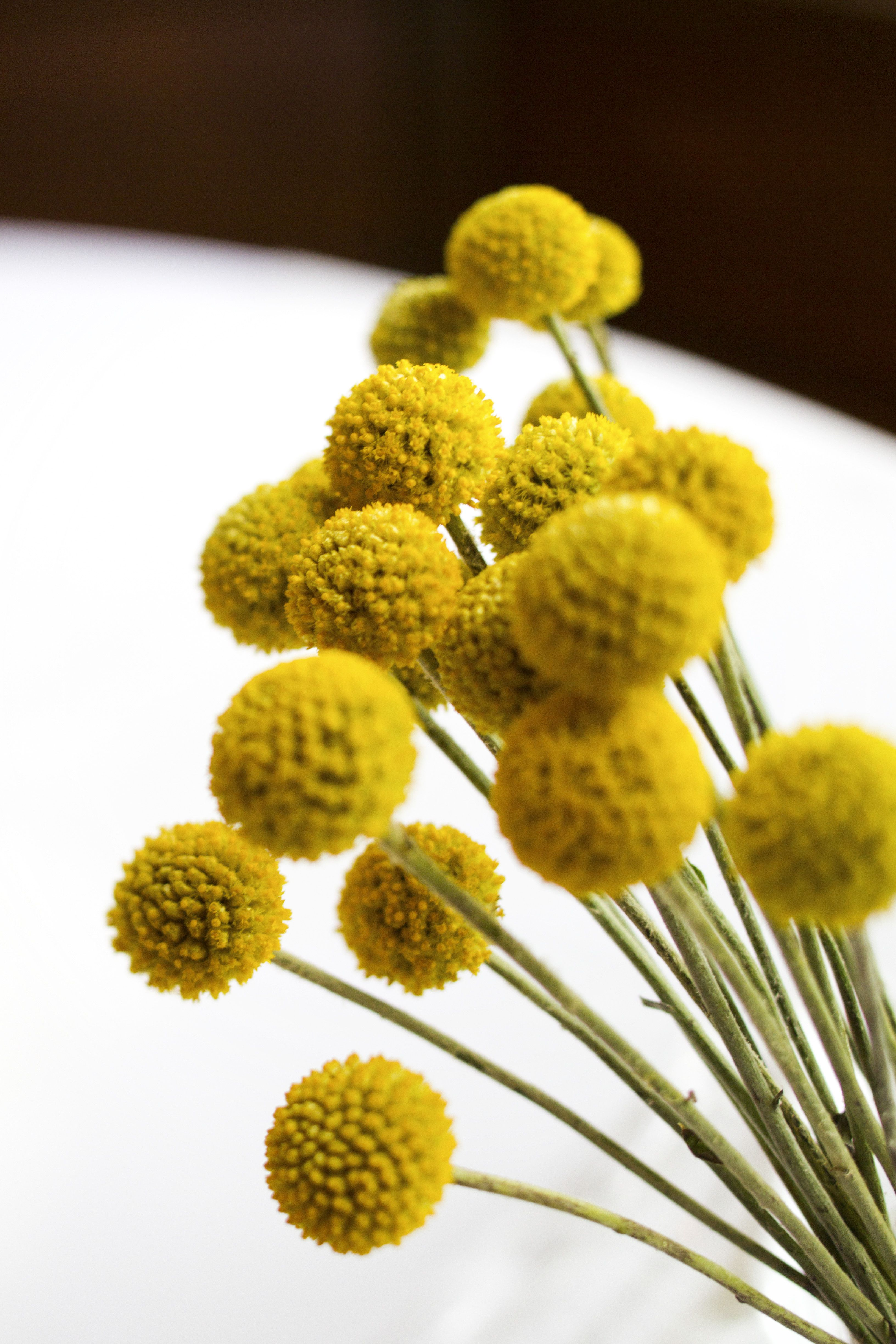 Flowers Page 4 Flowers Billy Buttons Wedding Flowers