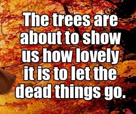 #the trees are...